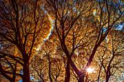Jenny Rainbow - Lacy Willows in Autumn Glory