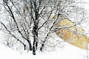 Winter Scenery Prints - Lacy Winter. Golden Pond Print by Jenny Rainbow