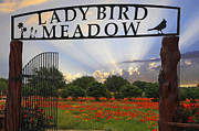 Bird; Meadow Acrylic Prints - Lady Bird Meadow Acrylic Print by Lynn Bauer