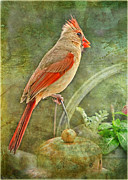 Feeder Greeting Cards Posters - Lady Cardinal in the garden Poster by Debbie Portwood