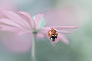 Ladybird Photos - Lady in Pink by Jacky Parker