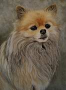 Brown Dogs Pastels - Lady by Joanne Grant