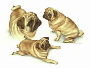 Toy Animals Prints - Lady Marmalade of Lydiard Pug Print by Nan Wright