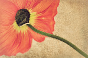 Perspective Mixed Media - Lady Poppy by Angela Doelling AD DESIGN Photo and PhotoArt