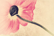 Flower Picture Posters - Lady Poppy II Poster by Angela Doelling AD DESIGN Photo and PhotoArt