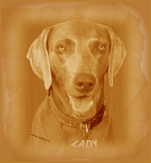 American Kennel Club Posters - LADY The Weimaraner Poster by Sherry Gombert