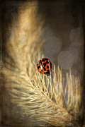 Wandering Prints - Ladybird Print by Darren Fisher