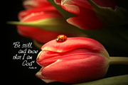 Floral Art Photos - Ladybug and Tulip by Linda Fowler