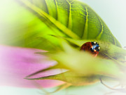 Vibrant Flower Framed Prints - Ladybug III Framed Print by Marco Oliveira