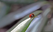Kay Lovingood Art - Ladybug on a Leaf by Kay Lovingood