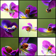 Contemporary Collage Metal Prints - Ladybug on Parade Metal Print by Lisa Knechtel
