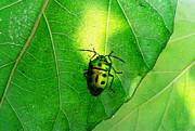 Ramabhadran Thirupattur - Ladybug