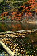 Birch River Prints - Lagoon of Logs and Leaves Print by Robert Harmon