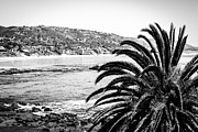 Laguna Beach Posters - Laguna Beach California in Black and White Poster by Paul Velgos