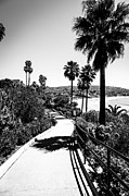 Pacific Coast Beach Framed Prints - Laguna Beach Heisler Park in Black and White Framed Print by Paul Velgos