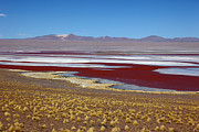 Sud Metal Prints - Laguna Colorada Bolivia Metal Print by James Brunker