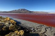 Bolivia - Laguna Colorada by James Brunker