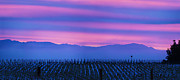 Merlot Prints - Laguna De Santa Rosa Morning Sky Print by Stan Angel