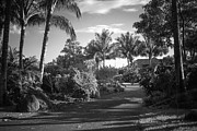 Lahaina Prints - Lahaina Palm Shadows Print by Sharon Mau
