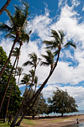 Most Photo Posters - Lahaina Palms Poster by Paulette Wright