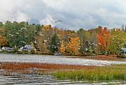 Lake Carmi Autumn 2012 Print by Deborah Benoit