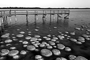 Robert Caddy - Lake Clifton Thrombolites