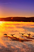 Emily Stauring - Lake George Cinco