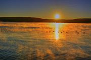 Emily Stauring - Lake George Gold