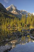 Lake Ohara, Yoho National Park, British Print by Peter Carroll