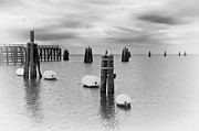 Pilings Photos - Lake Okee Pilings by Patrick M Lynch