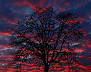 Lake Oswego Sunset Print by Nick  Boren