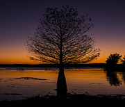 Murray Ky Prints - Lake Sunset Print by Amber Kresge