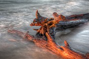 Whitefish Posters - Lake Superior Driftwood Poster by Twenty Two North Photography