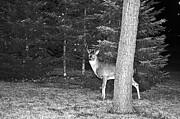 Daryl Macintyre - Lake Superior Wildlife