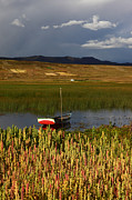 James Brunker Metal Prints - Lake Titicaca and Quinoa Field Metal Print by James Brunker