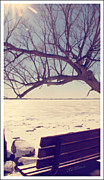 Lakeshore Digital Art - Lakeshore Rest Bench by Donna Brown