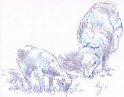 Mike Jory - Lamb And Sheep Drawing