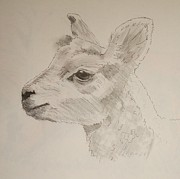 Sheep Originals - Lamb by Mike Jory