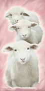 Wild Animal Framed Prints - Lambs Triplets Framed Print by Constance Woods