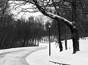 Winter Roads Metal Prints - Lamp-Light Lane Metal Print by Mel Steinhauer