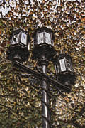 Boston Mountain Prints - Lamp Post in the Fall Print by T C Hoffman