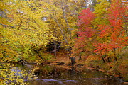 A River In Autumn Posters - Lamprey In Fall Poster by Eunice Miller