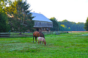 Horses Digital Art - Lancaster County Farm by Bill Cannon