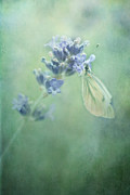 Lavender Blossom Prints - Land Of Milk And Honey Print by Priska Wettstein