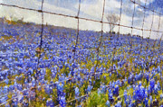 Carrie OBrien Sibley - Land of the Bluebonnets