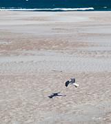 Michelle Wiarda - Landing on the Beach