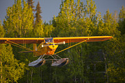 Aircraft Print Framed Prints - Landing Super Cub Framed Print by Tim Grams