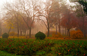 Eerie Paintings - LandsBeautiful park on misty autumn day by Sasa Prudkov