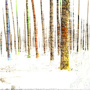 Mary Clanahan - Landscape Forest Mapping...