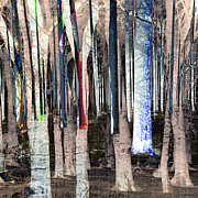 Mary Clanahan - Landscape Forest Trees